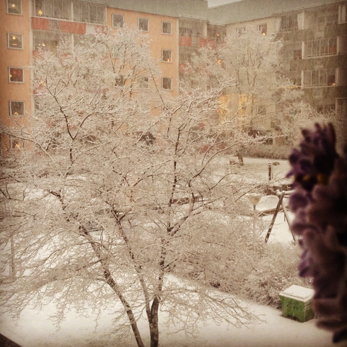 Winter. Photo: Charlotte, My Green Nook ©2014-2015