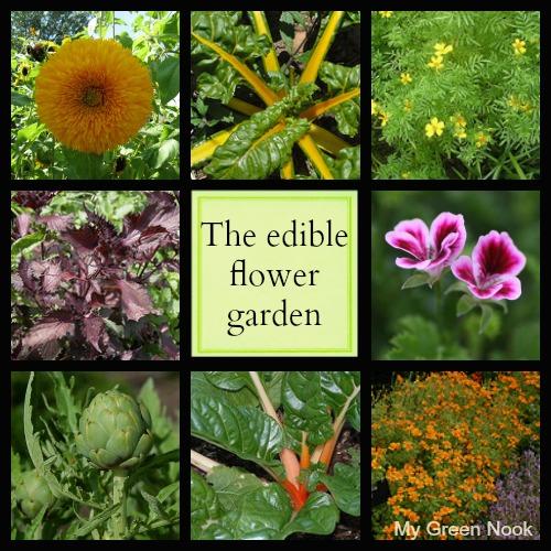 The edible flower garden - My Green Nook