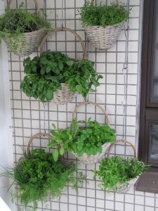 Herbs - vertical garden. Start a Garden | My Green Nook