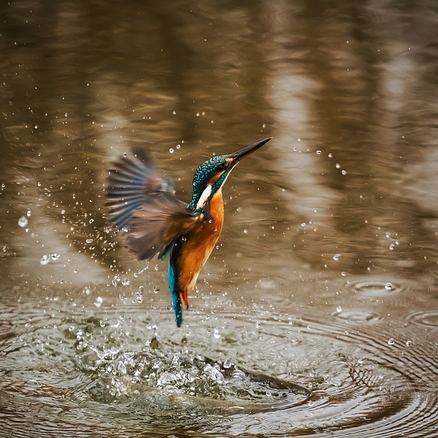 kingfisher-1068684_640
